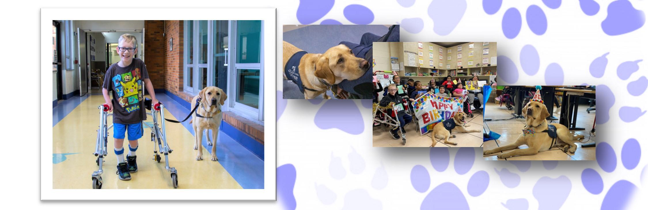Meet Sunny, our Facility Dog!